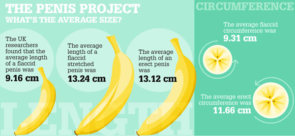 What Is The Average Penis Size In Australia
